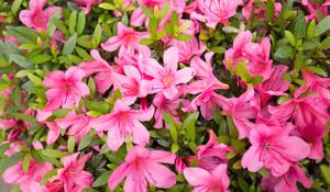 Plantas para cultivar na Primavera