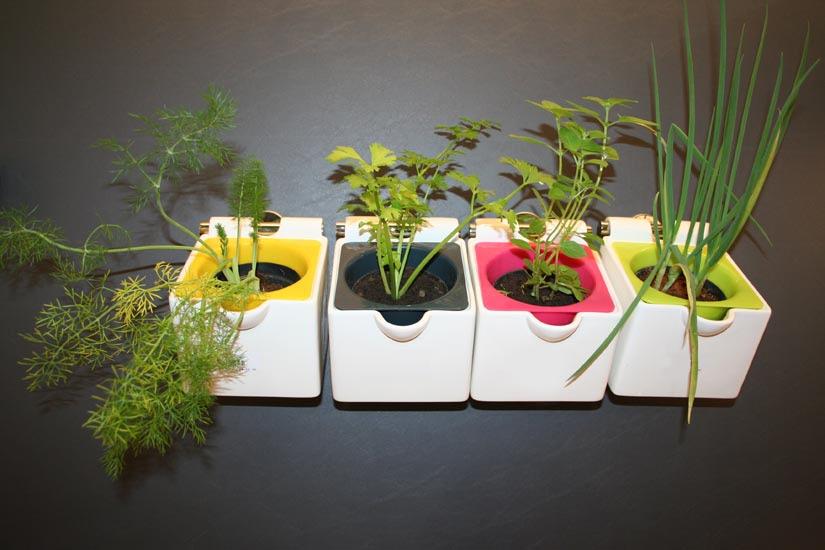 4 ideias para ter plantas em casa
