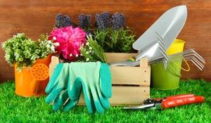 Como cuidar do jardim na primavera