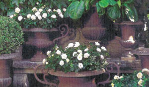 Pequenos jardins - Parte 2 - Vasos