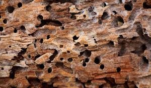 Proteja suas peças de madeira contra cupins
