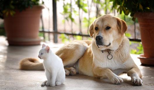 Não deixe sua casa com odor de animais.