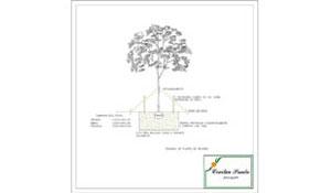 Plantio básico de Árvores - 1ª parte