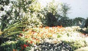 Como cuidar do seu pequeno jardim