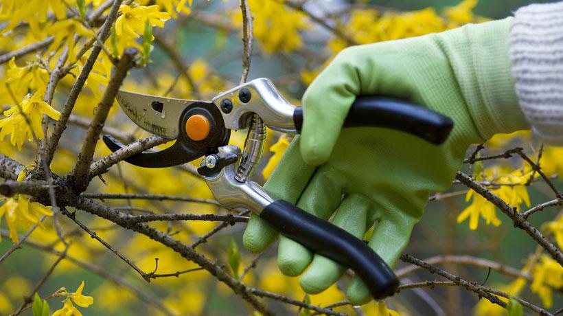 Pessoa podando os galhos de árvore