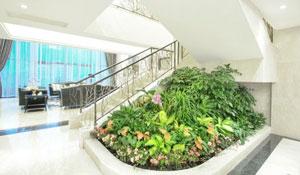 Como cuidar das plantas de interiores