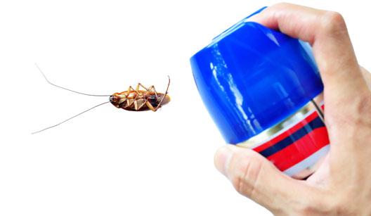 Spray mata insetos com uma barata