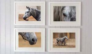 Cavalos na decoração