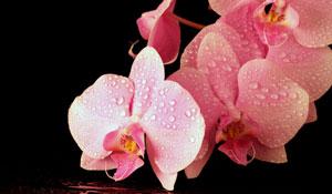 Como cuidar das orquídeas