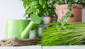 Como cultivar horta em apartamento