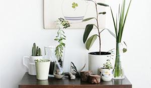 Como criar um cantinho verde em ambientes pequenos