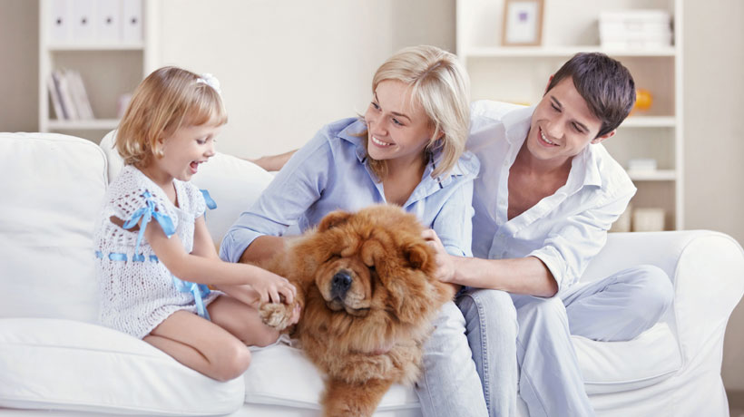 Família brincando com cachorro no sofá