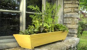 Onde improvisar uma horta com pouco espaço