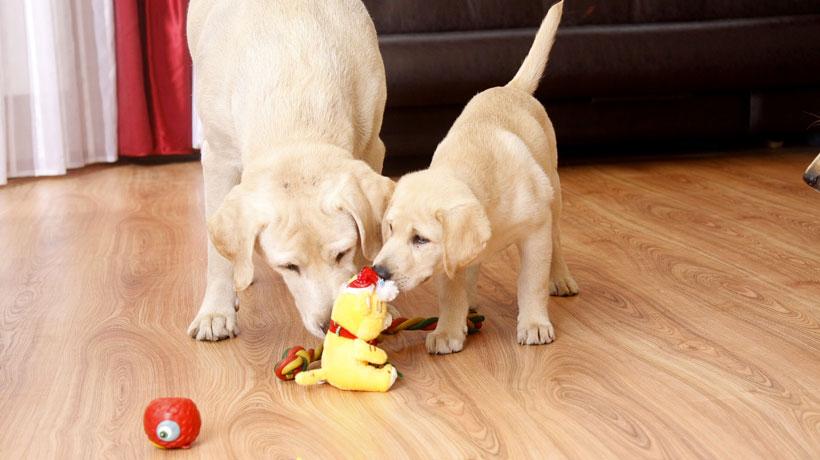 Cachorro e gato com brinquedos
