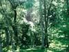 A vivência da paisagem