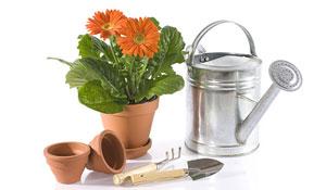 Plantas medicinais cuidados no cultivo