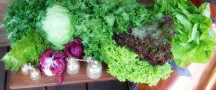 Como comprar hortaliças de folhas