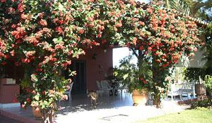 Trepadeiras Clerodendron