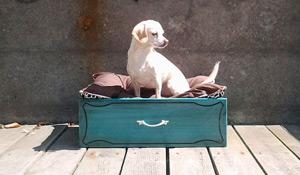 6 opções de cama sustentável para cães e gatos