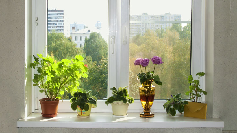 Coloque plantas dentro de casa