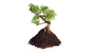 Utilidade das árvores