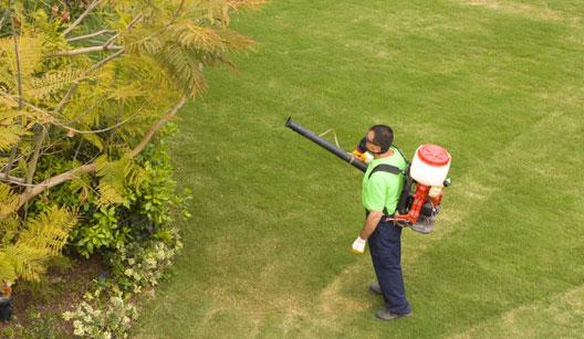 Homem pulverizando o jardim