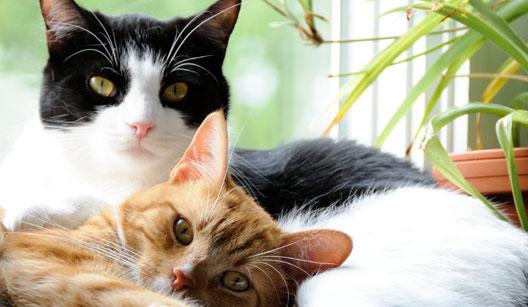 Mantenha os gatos em casa