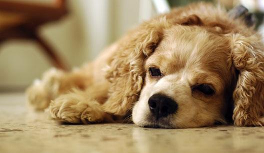 Cansaço é um dos sintomas