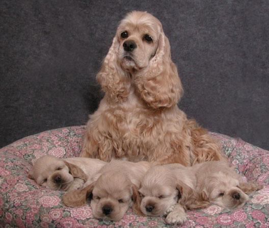 Cadela e filhotes