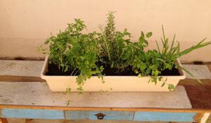 Passo a passo para montar uma horta doméstica