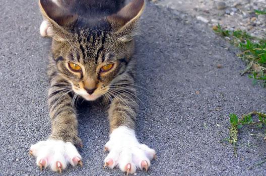 Gatos podem pegar doenças na rua