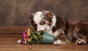 Plantas para manter longe dos animais de estimação
